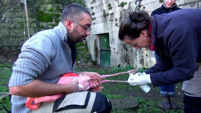 Passion animale - Vétérinaire Mélanie Berthet soin flamant rose