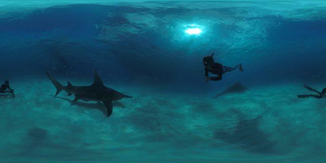 DolphinMan VR - Rencontre avec Fabrice Schnöller - ©Seppia